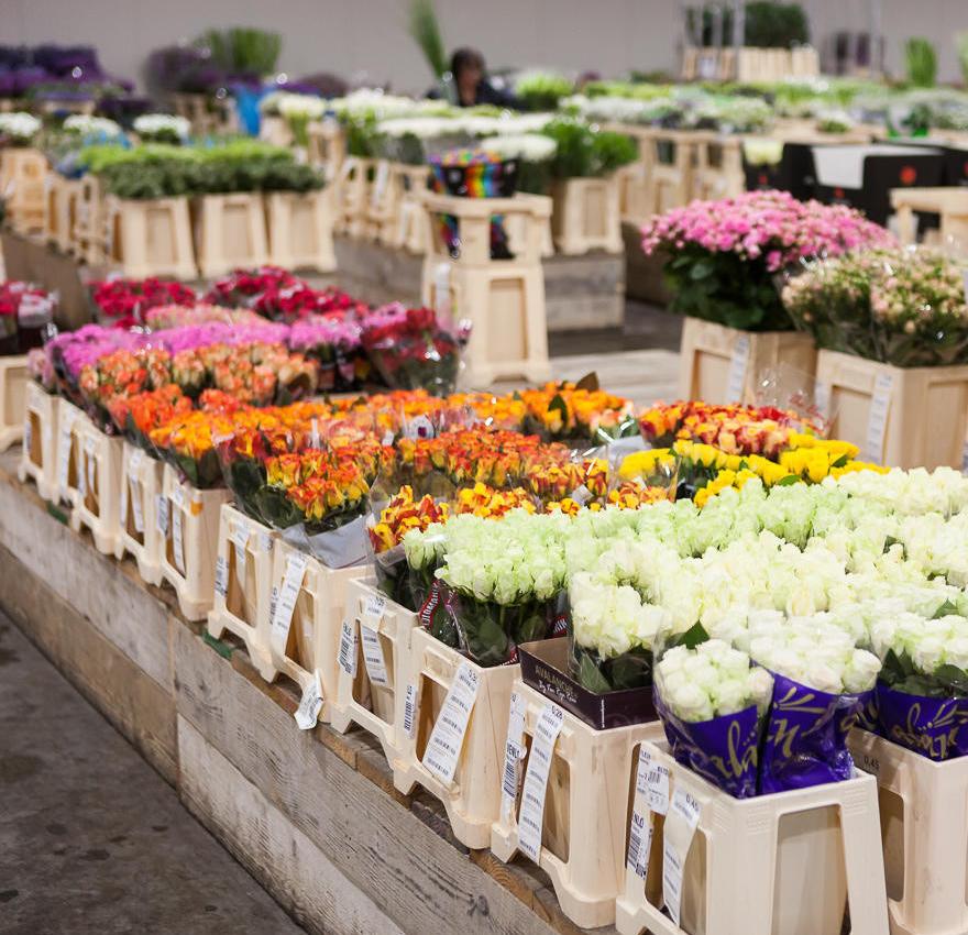 fleurametz flower wholesale